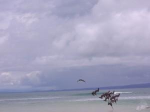 Pelícanos pescando. Playa Matapalos, Costa Rica