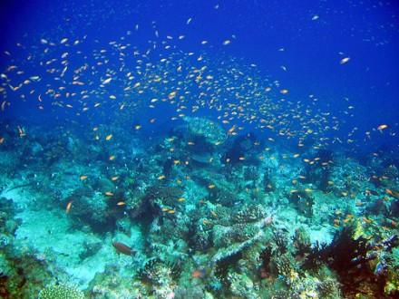 Azul, peces, corales en Zanzíbar