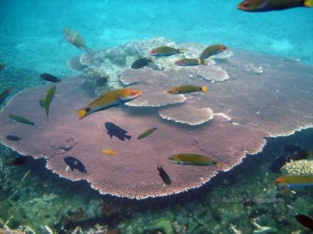Corales en Pulau Redang