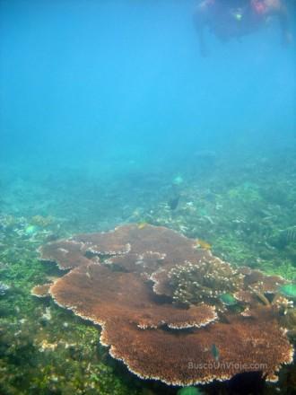 Pulau Redang. Snorkel entre corales