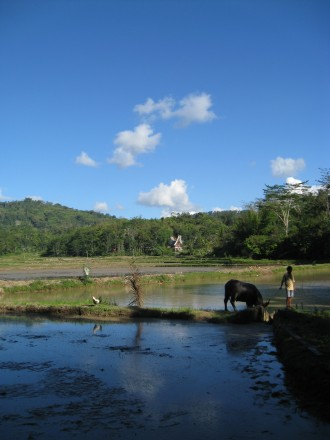 Tana Toraja, en cualquier rincón