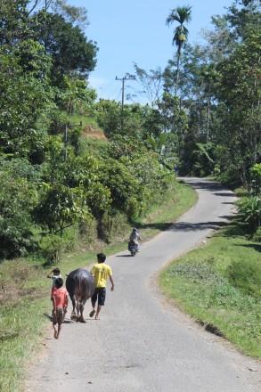 Búfalo, niños y camino sinuoso en Tana Toraja