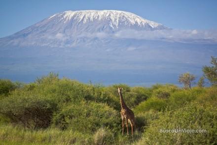 El Kilimanjaro desde el Parque Nacional de Amboseli en Kenia