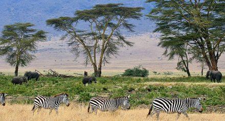 Parque Nacional del Serengueti Tailandia