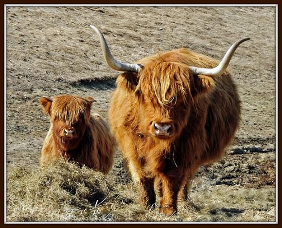 Viajes a Escocia