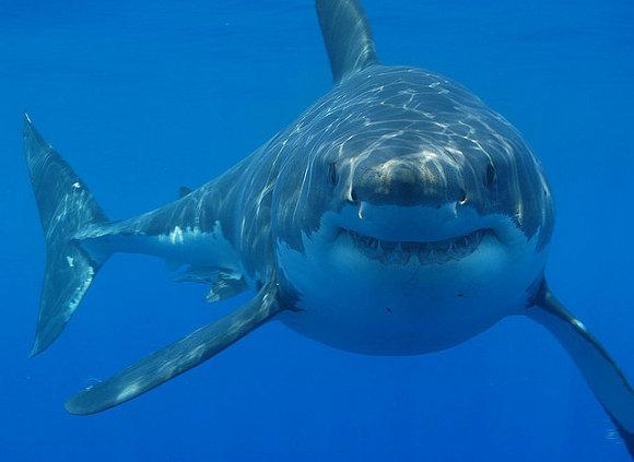 Bucear con tiburones en Sudáfrica