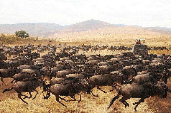 La gran migración (Kenia y Tanzania)