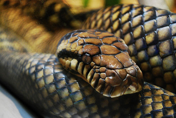 Serpientes en Kenia