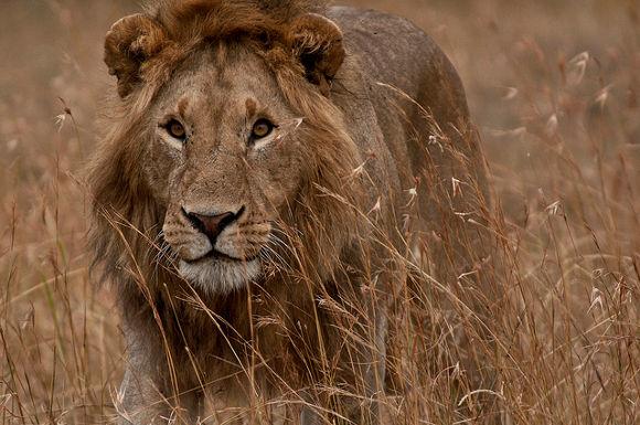 Viajes a Kenia para ver animales