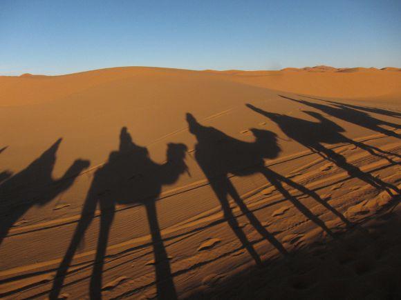 Sombras de camellos en Marruecos