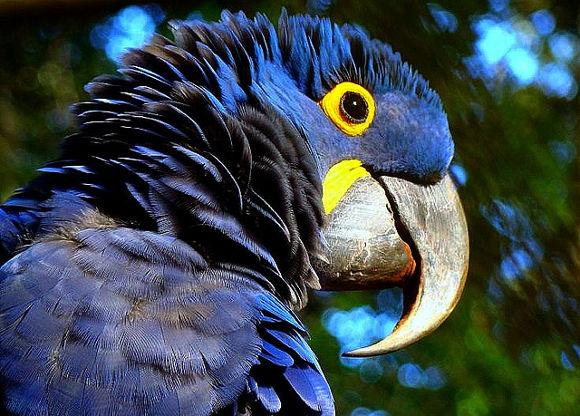 Viajes al Amazonas en Brasil
