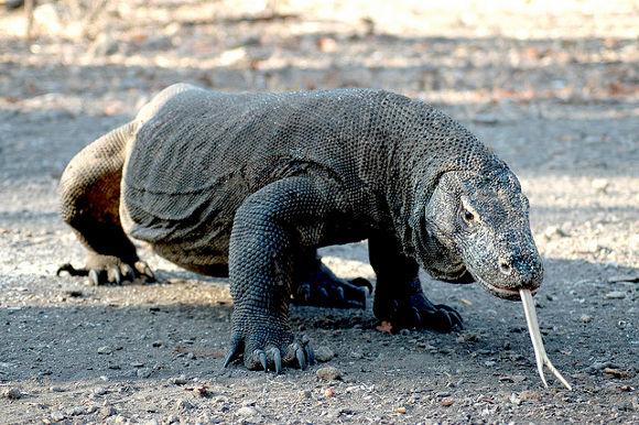 Parque Nacional de Komodo, Indonesia