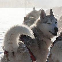 Viajes a Laponia en Nochevieja