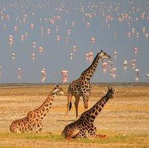 Viajes a Tanzania en Nochevieja