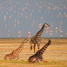 Viajes a Kenia y Tanzania en verano