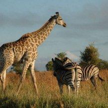 Viajes a Sudáfrica en verano