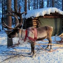 Viajes a Laponia en el puente de diciembre