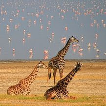 Viajes a Kenia y Tanzania