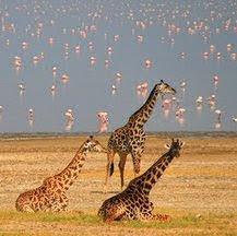 Viajes a Kenia y Tanzania