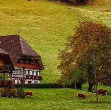 Viajes a Baviera y Selva Negra