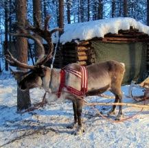 Puente de diciembre en Laponia