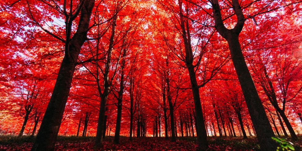 Viajes de otoño