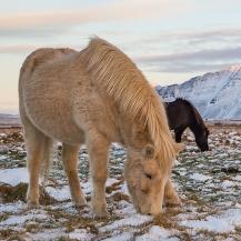 La Islandia Boreal en grupo