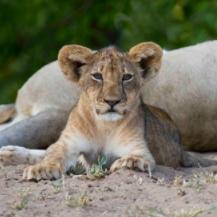 Safari por Sudáfrica