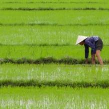Fin de año en Vietnam