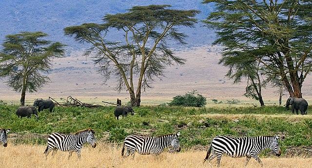 Parque Nacional del Serengueti Tanzania