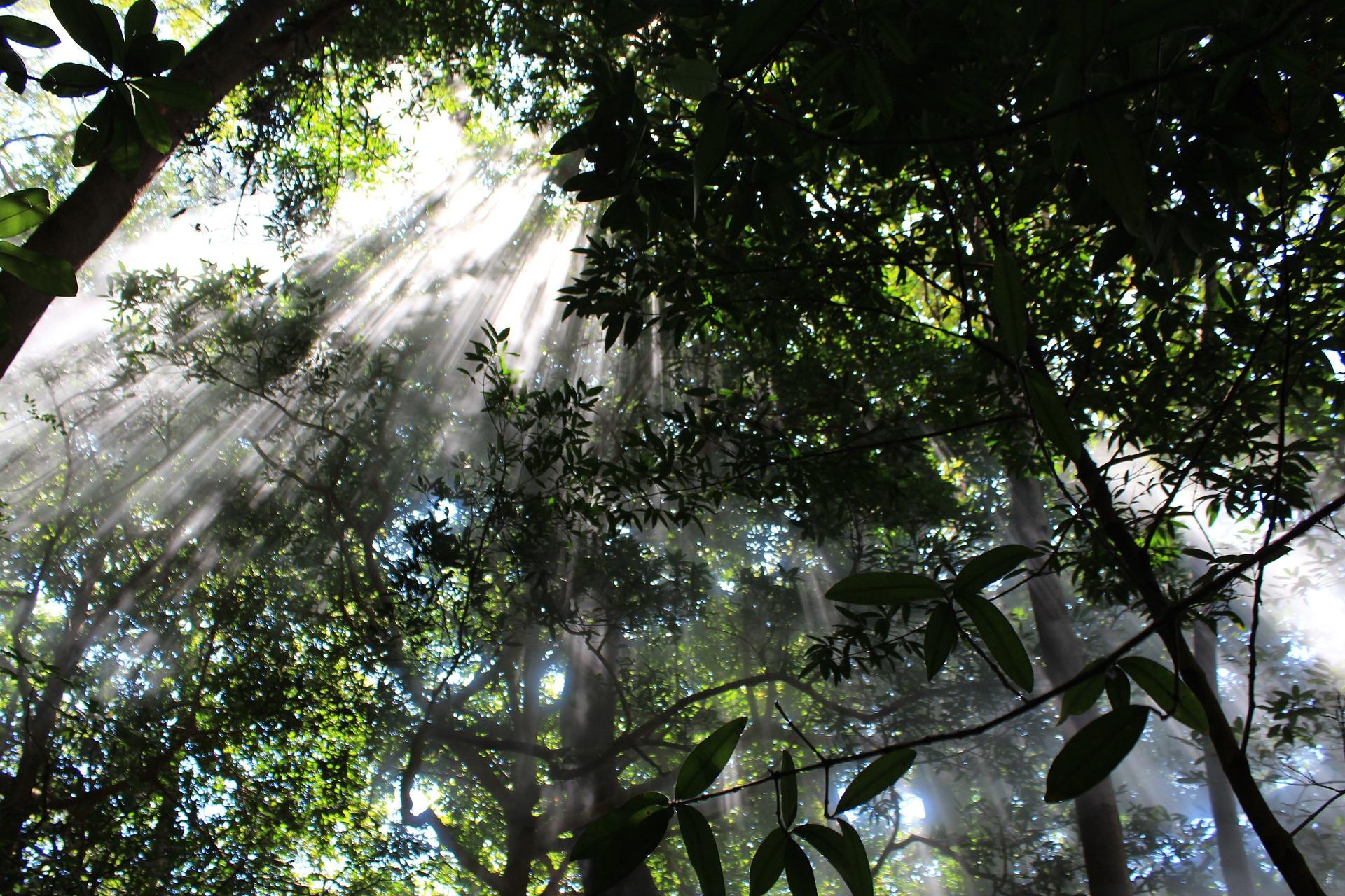 Los mejores parques naturales de Costa Rica en grupo