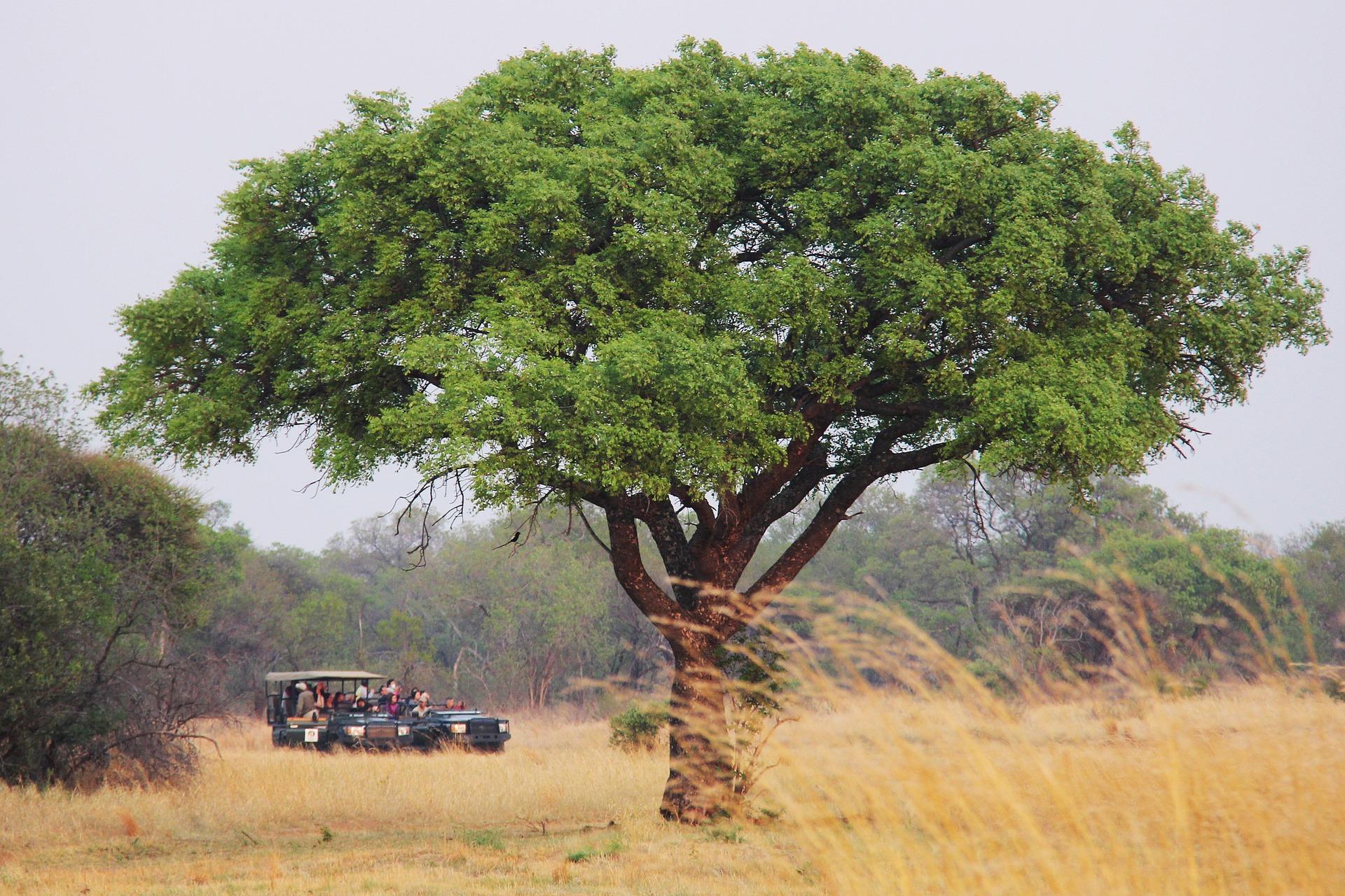 Sudáfrica: la famosa región de Kruger