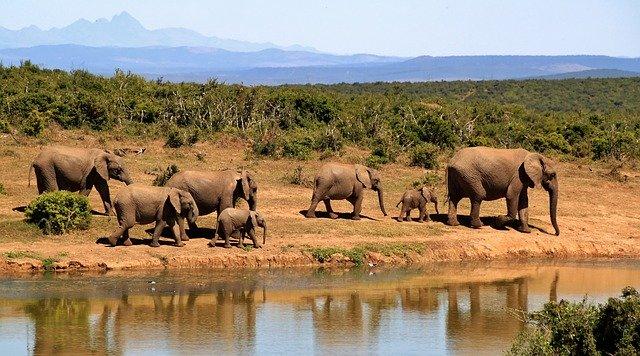 Sudáfrica: safaris en la exclusiva reserva privada de Sebatana
