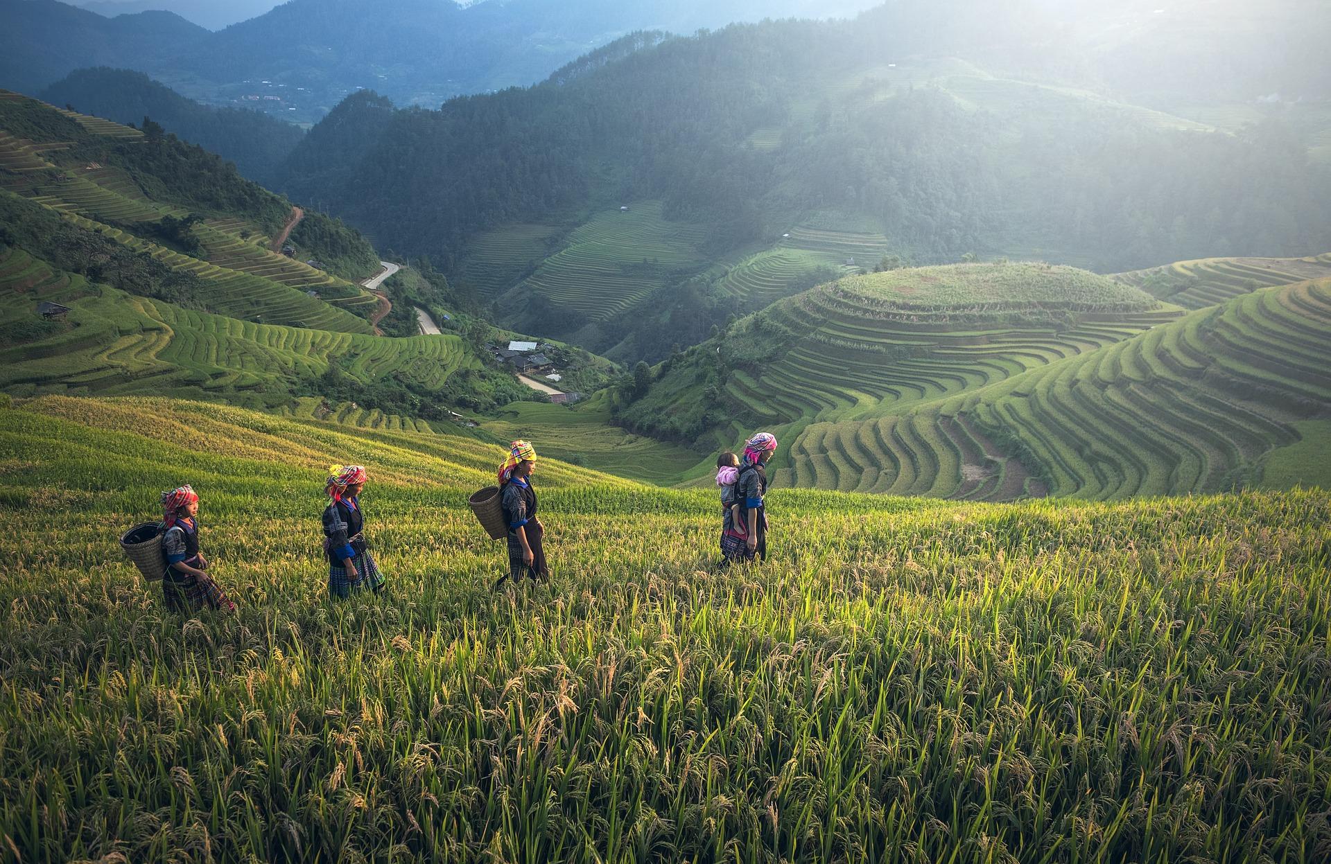 Circuito por las islas de Indonesia (Borneo, Java, Sulawesi y Bali)