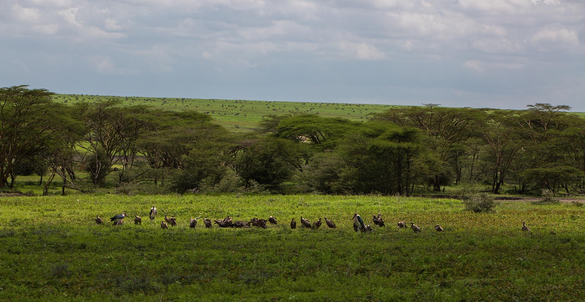 Naturaleza y el nacimiento del ñu en Tanzania