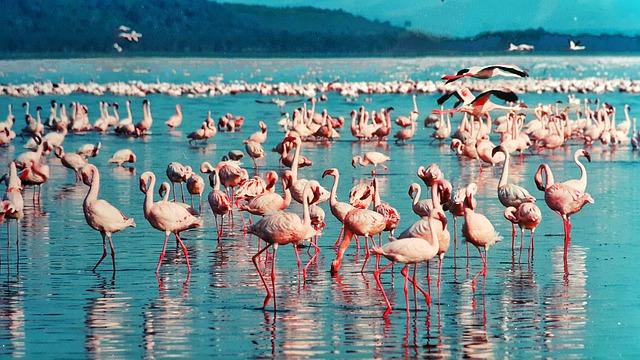 Fin de año en  Kenia: 8 días de safaris y experiencias