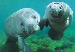 Buceo en el Mar Rojo en grupo privado