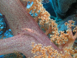Buceo en Australia - Reserva viajes para bucear en Australia