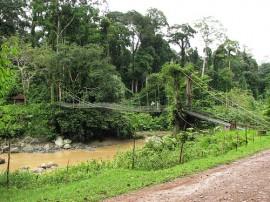 Circuitos por Borneo