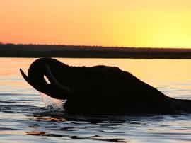 Safari en Botswana