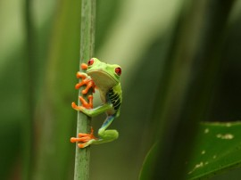 Fauna de Costa Rica