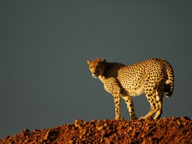 Ver animales salvajes en Kenia con las mejores agencias