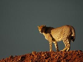 Circuitos por Kenia y Zanzibar