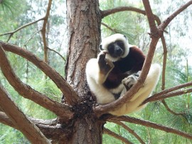 Circuitos por Madagascar