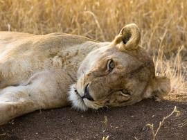Circuitos por Parque Nacional Serengueti