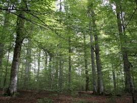 Circuitos por Selva de Irati