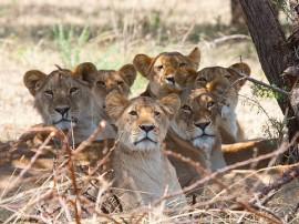 Safaris en Tanzania con las mejores agencias