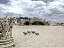Circuitos por Túnez